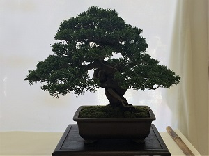 Picture of bonsai tree for Photography Month Sacramento