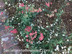 Photo of native plant for Gardens Gone Native Tour