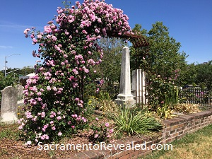 Photo of climbing roses in the Sacramento Historic Rsoe Garden