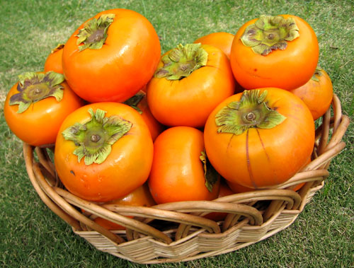 Love, love me do: Persimmons (2/6)