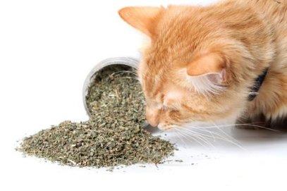 Médecine douce pour animaux