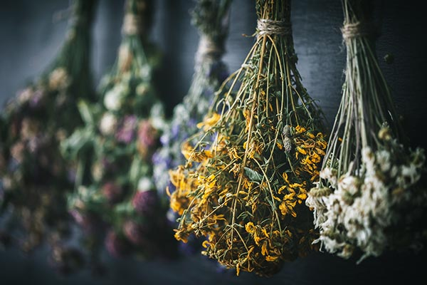Hanging bunches of medicinal herbs and flowers.