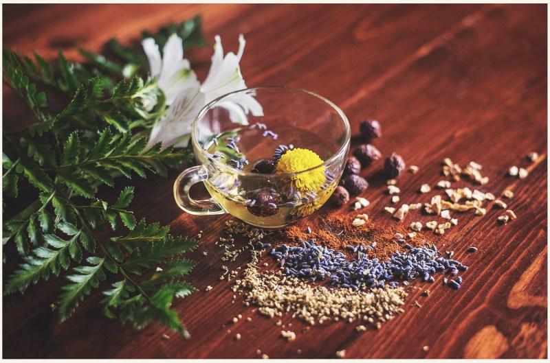 master herbalist certification online