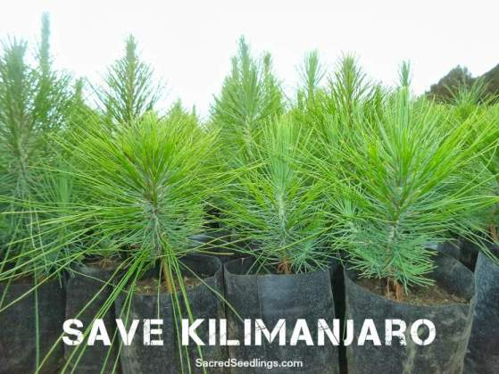 reforestation and climate change