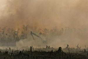 climate change and deforestation