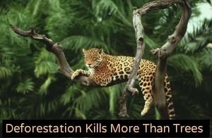 rainforest conservation Latin America