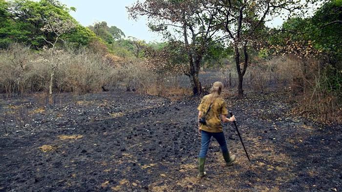 deforestation and biodiversity India