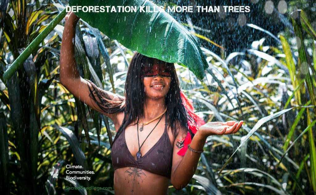 Amazon basin deforestation