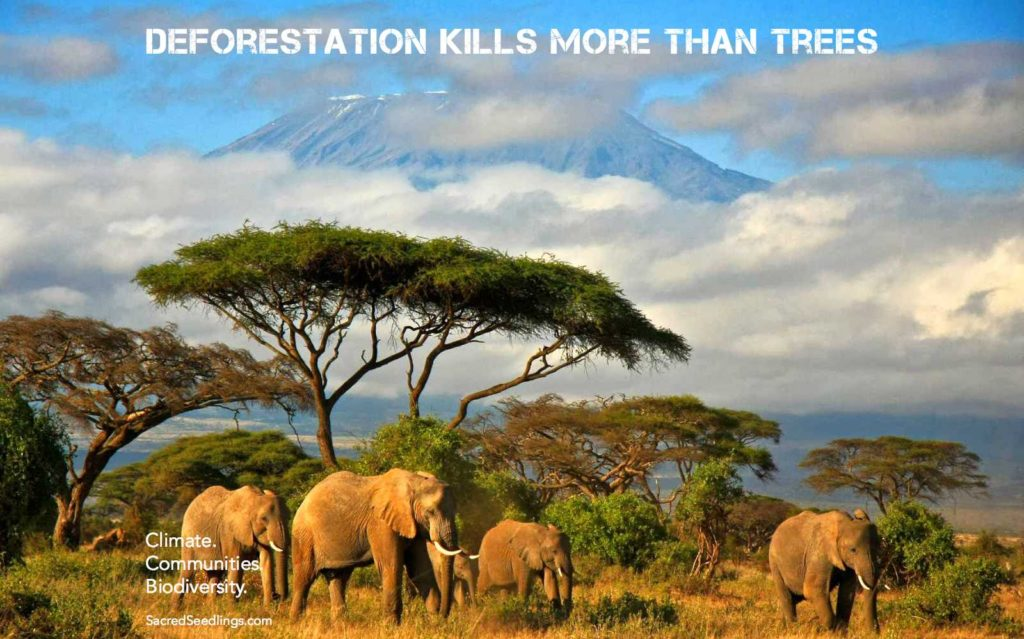 forest conservation and climate change