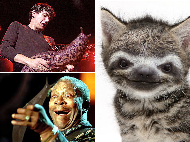Sloth Kittens And Slug Guitars