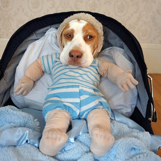 Adventures of Maymo the Lemon Beagle