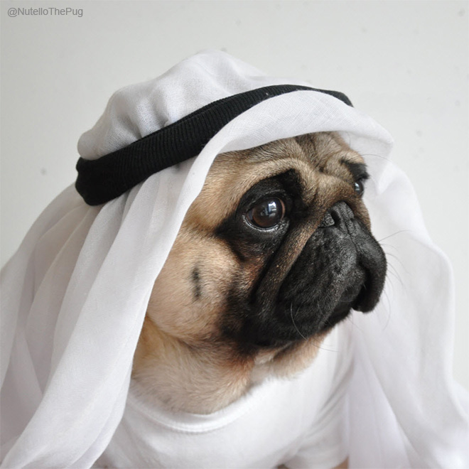 Meet Nutello The Most Fashionable Pug On The Internet