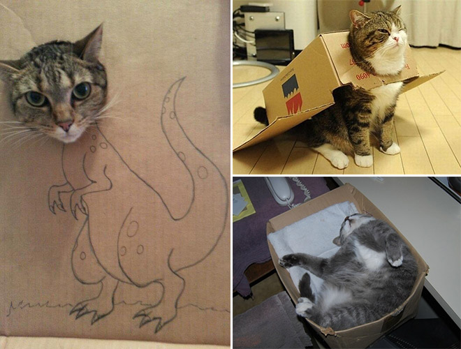 Cats Have A Mysterious Obsession With Boxes