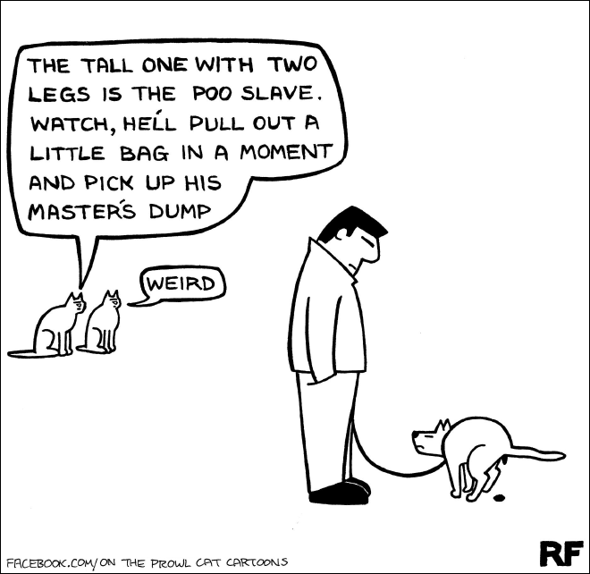 Funny Illustrations That All Cat Owners Will Understand