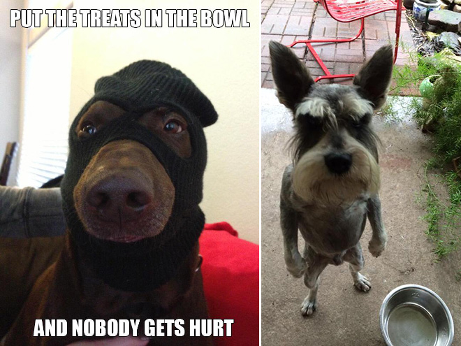Funny Memes About Animals
