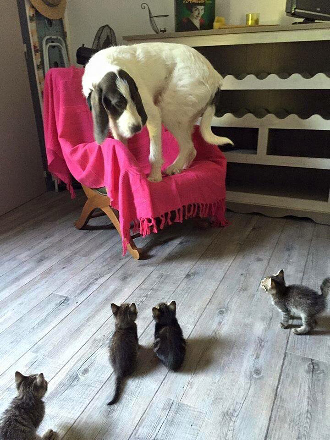 Terrified of cats.