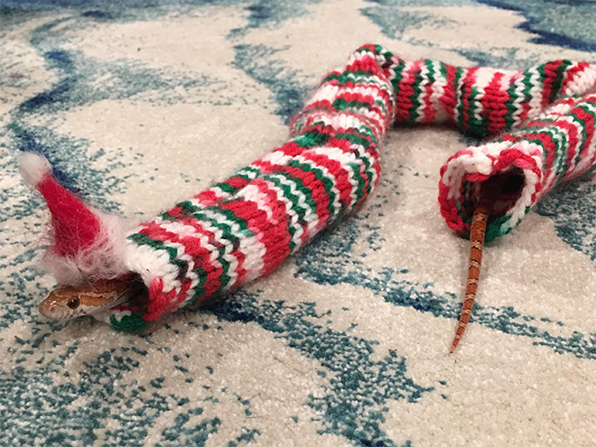 Snake in a sweater.