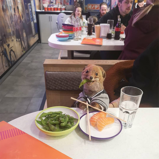 Having fun with a stuffed fox.