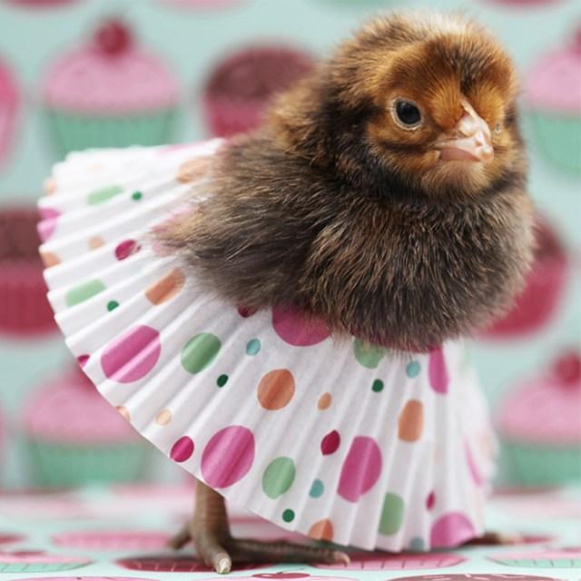Chick tutu fashion.