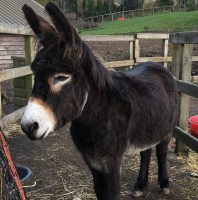 Fundraising night for Red the donkey saved from slaughter