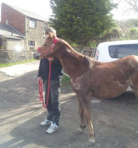RECOVERING: The pony is being cared for