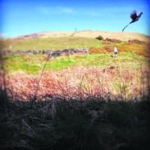 4221 Saddleworth Captured - Graeme Rothery