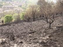 charred hillside 3