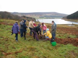 p32 tree planting 1