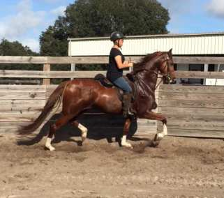 destinys-lady-lightning-saddle