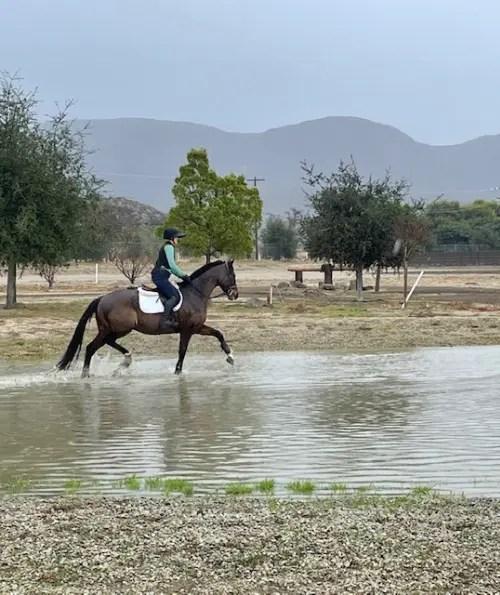 équitation équitation un cheval brun dans l'eau tout en portant un gilet de sécurité équitation