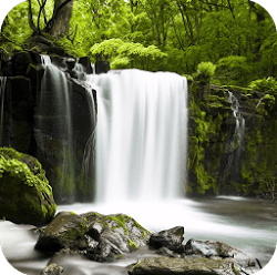 Relax Forest – Nature Sounds v4.3.1 APK (Unlocked)