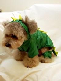 Godzilla Suit Makes Teddy Bear Dog Cry | Sad Etsy Dogs