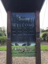 New Zealand only Zealong tea Planation