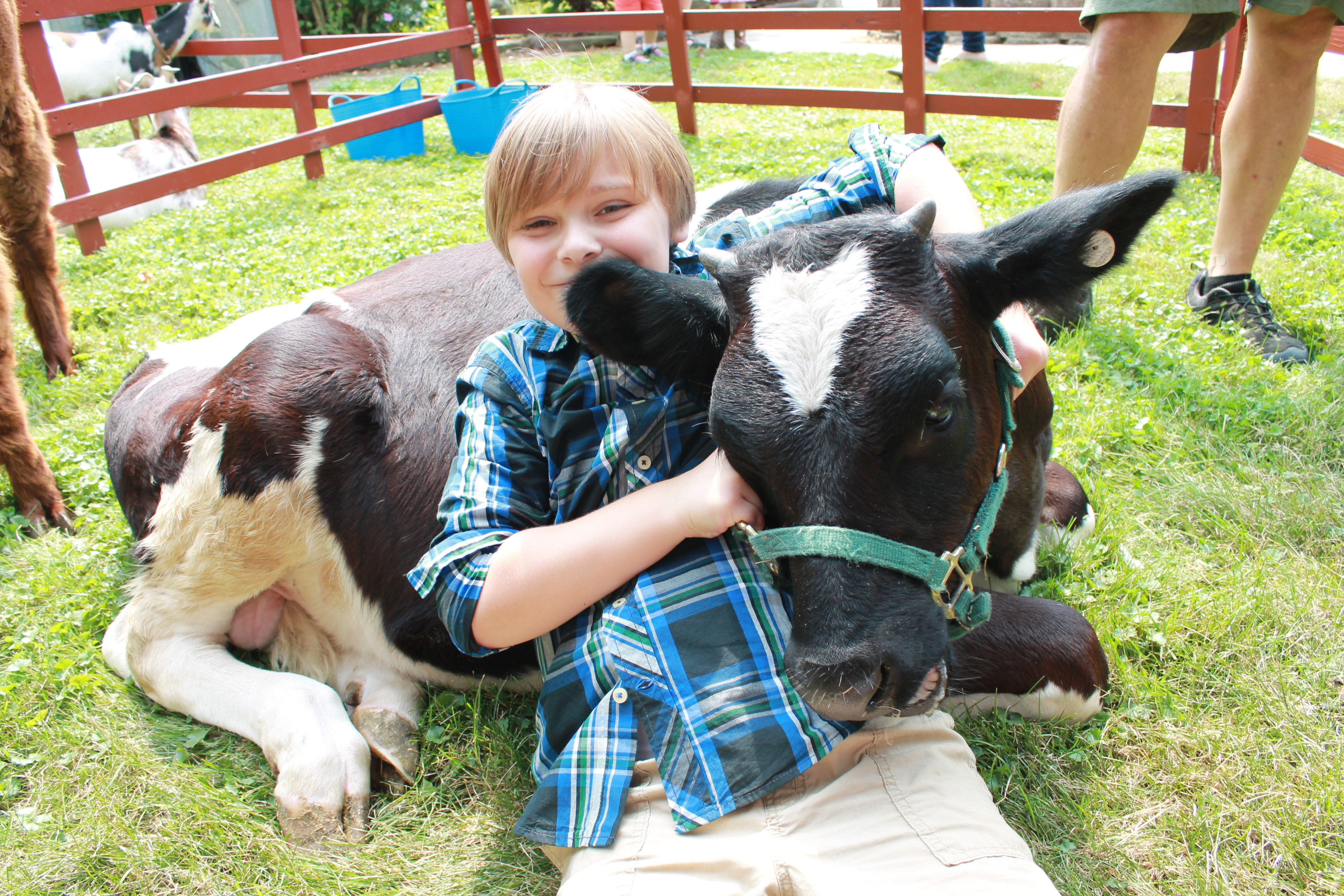 50 Unique Petting Zoo Rental for Birthday Party Birthday Activities