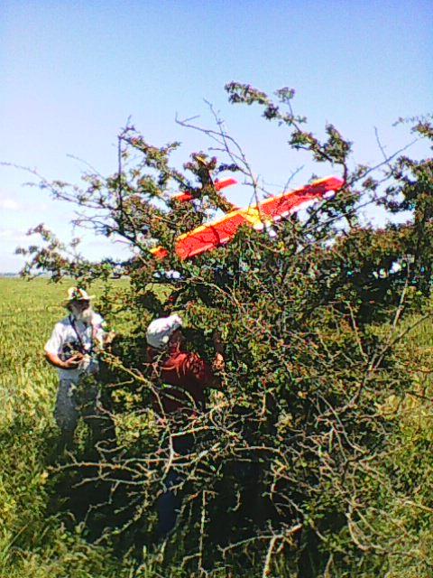 Who said planes don't grow on trees?