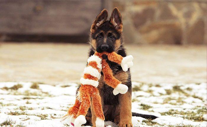 Mainan untuk anjing melakukannya sendiri