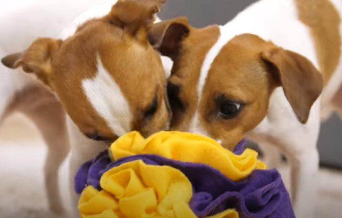 Nakenboll för hund