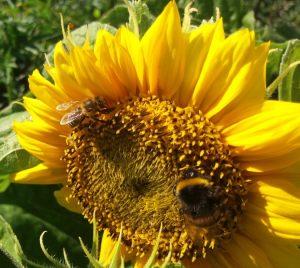 пчелобоязнь