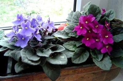 """Ismerje meg, hogyan kell vízbélyegeket közvetlenül és a növények megmondani, hogy """"köszönöm""""!"""
