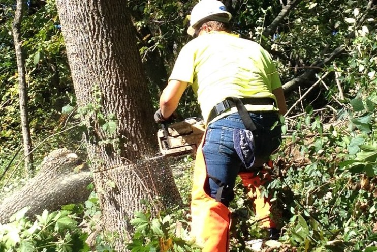 Image of tree removal worker using chainsaw to remove tree