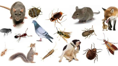 مكافحة الحشرات بالدمام