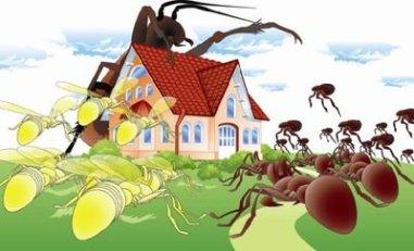 شركة-مكافحة-النمل-الابيض-بالاحساء
