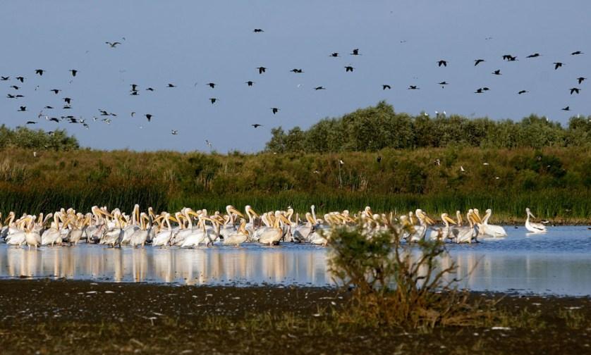 imagem-de-flamingos-na-lagoa