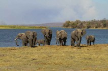 Elephants, Zambezi National Park, Zimbabwe