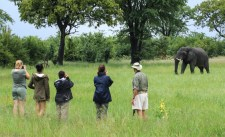 Nehimba walking safari