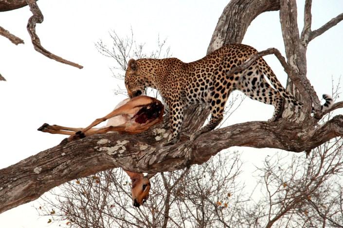 PN Kruger - Sudáfrica