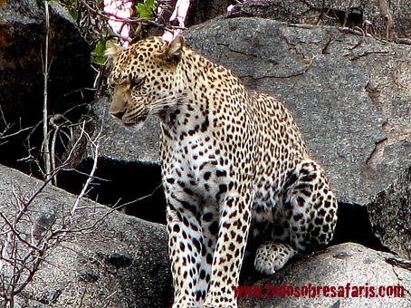 safari1-413