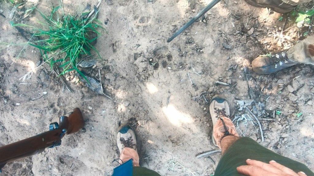 Spuren lesen auf während der Wanderungen auf Safari