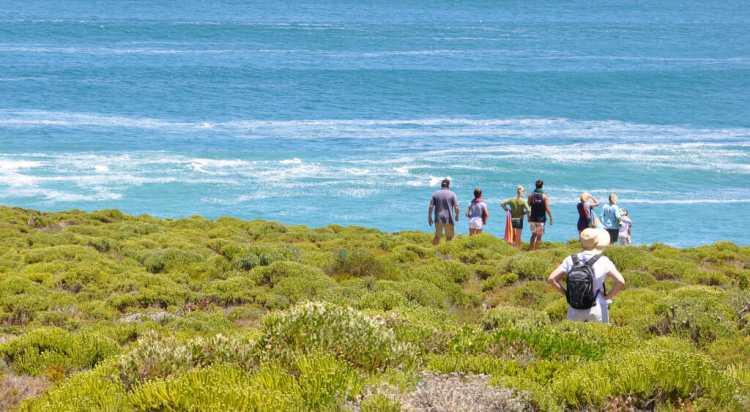 Walbeobachtung während der Wanderung entlang der Küste durch den Fynbos