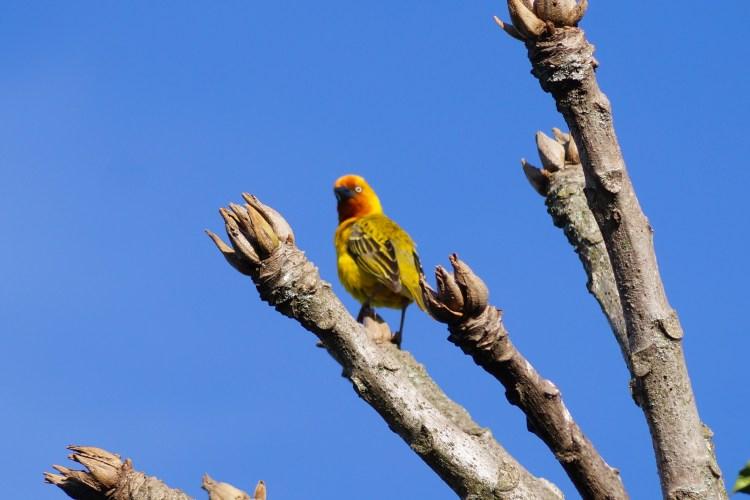 Birding im Malolotja Nature Reserve in Eswatini aka Avitourismus